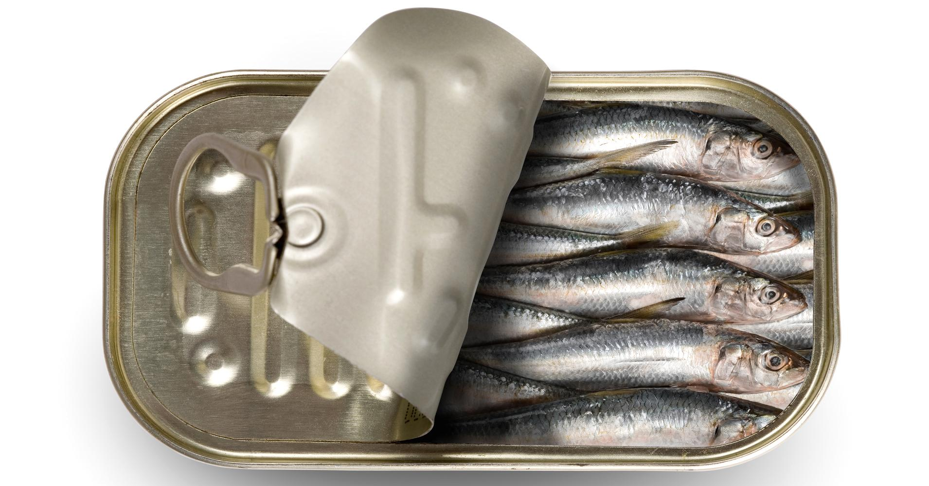 Sardines for Breakfast